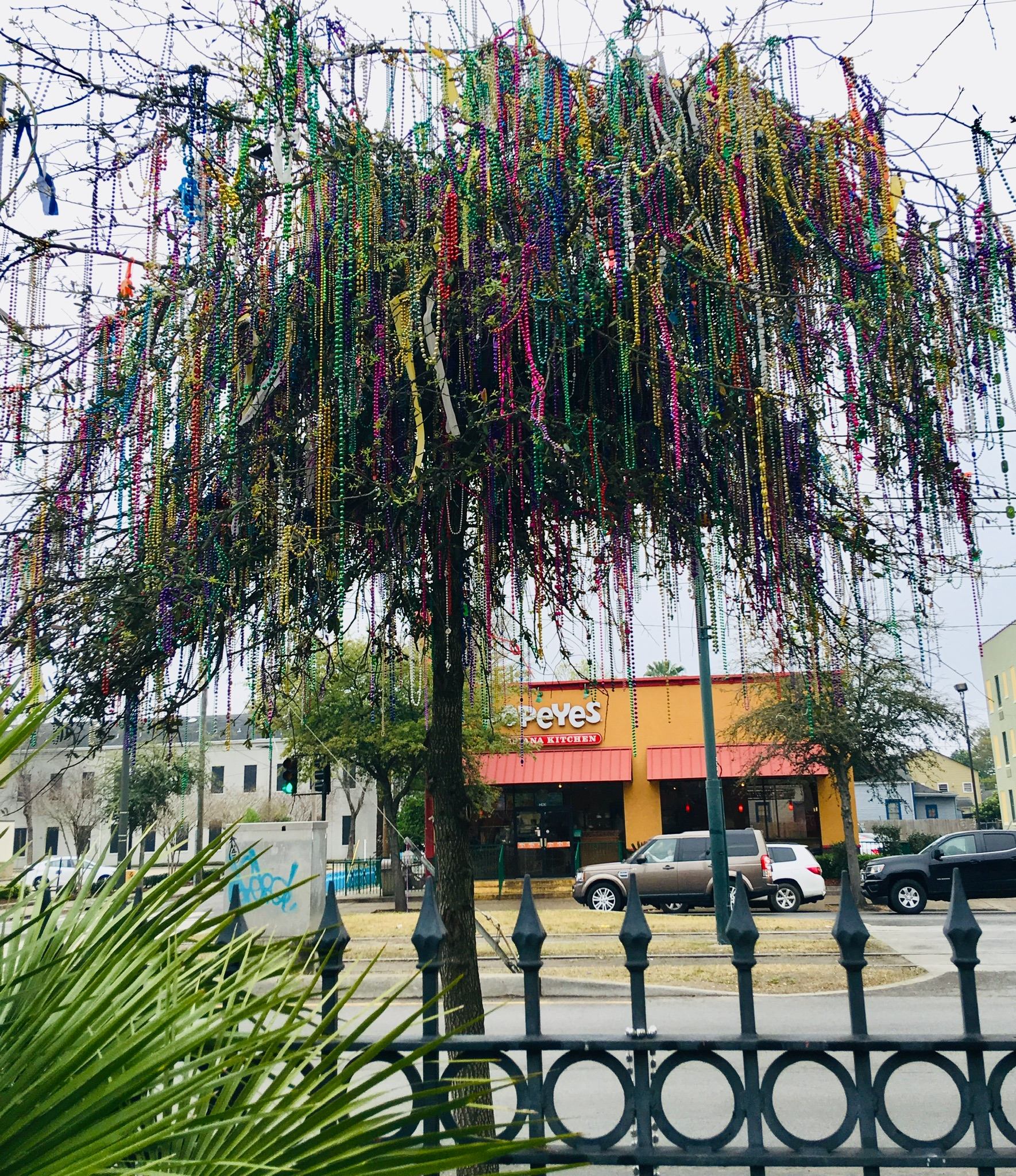Last Year's Post Mardi Gras Blog… how times have changed!